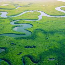 How can the financial sector address the biodiversity crisis?