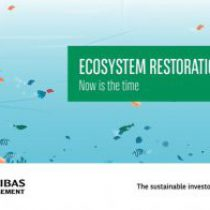 Video: Ecosystem restoration – Now is the time